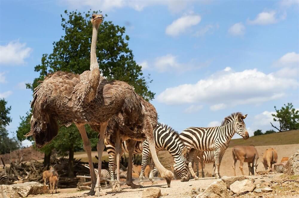 Grassavanne in Afrika der Zoom Erlebniswelt