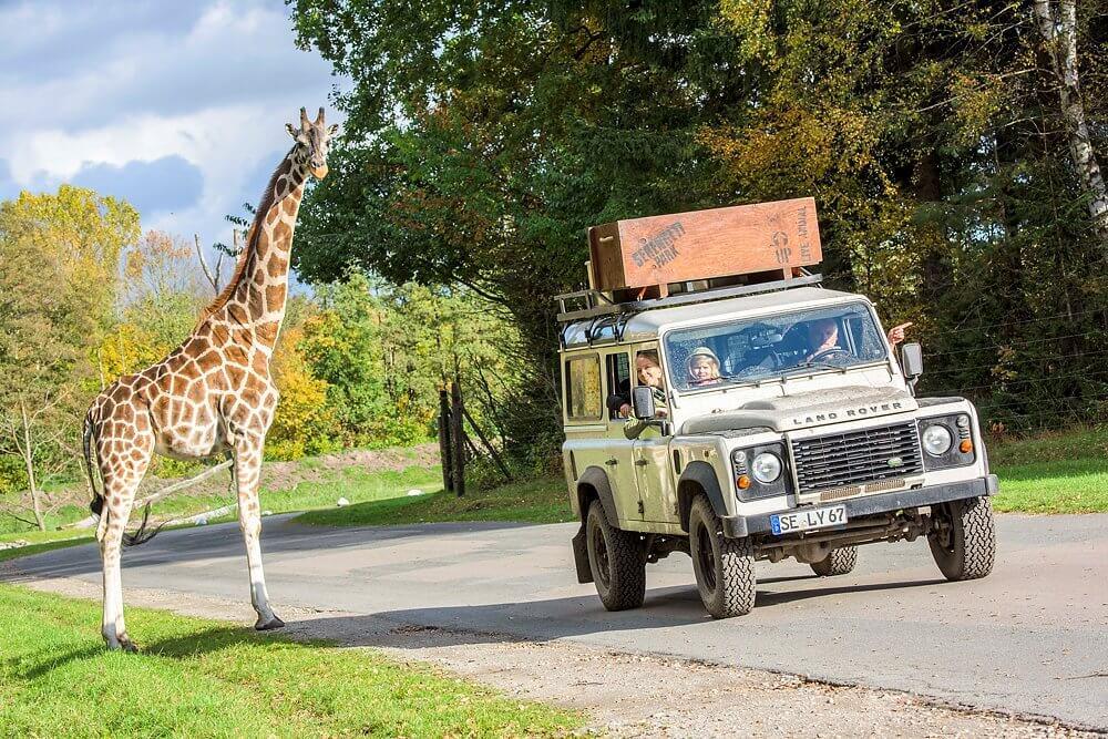 Safari-Tour im Serengeti-Park Hodenhagen