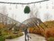 Mistelzweige vor der Achterbahn Troy im Freizeitpark Toverland